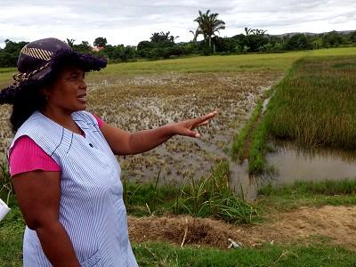 マダガスカルの養魚池